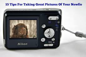 10 Tips For Taking Your by 15 Tips For Taking Great Pictures Of Your Newfie Mybrownnewfies Com