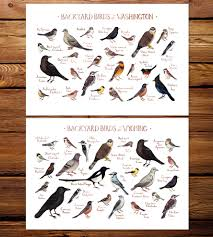 northwest state backyard birds art print features local pride