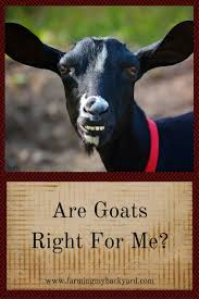 are goats right for me farming my backyard