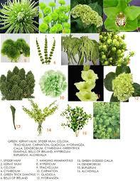 Identify Flowers - 26 best plant identification images on pinterest botany plants