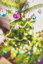 how to care for a real christmas tree huffpost