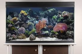 Marine Aquascaping Techniques Aquascaping Live Rocks In Your Saltwater Aquarium