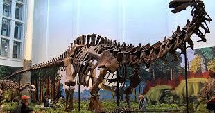 serena parker afghan hound judge apatosaurus fun animals wiki videos pictures stories