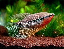 141 best fish and aquarium s images on aquarium ideas