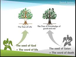 tree of in the bible meaning black hair ideas