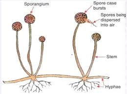 Reproduction In Flowering Plants - class 10 reproduction and asexual reproduction biology notes