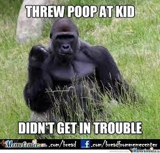 Funny Gorilla Meme - success gorilla by bread meme center