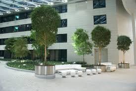 jardin interieur design créez votre jardin intérieur avec les plantes d u0027any green