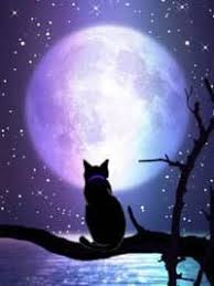 42 best cats and moon images on black cats cats