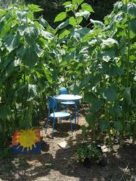 love joy and peas fun ideas from the children u0027s garden at the