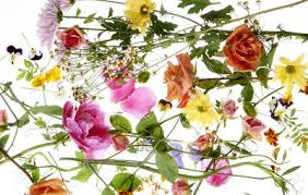 Edible Flowers Edible Flowers Are More Than Just A Garnish Runner U0027s World