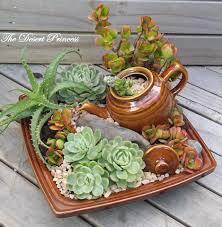 nice succulent arrangement succulents pinterest nice