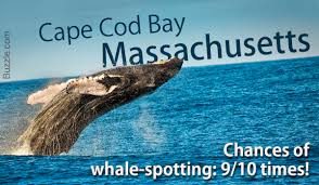 Whale Watches Cape Cod - these are by far the best whale watching places around the world