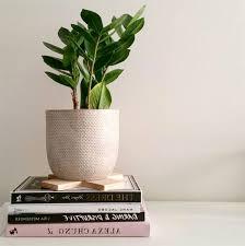 best indoor house plants popular houseplants 2017 beautiful best indoor house plants trees