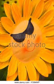 sunflower lawn ornaments sale keizer stock photos sunflower lawn
