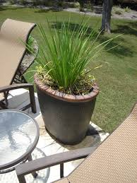 5 drought tolerant texas plants to use for landscaping south