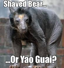 Angry Wolf Meme Generator - shaved bear weknowmemes generator