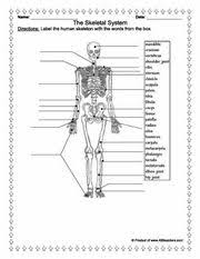 93 best anatomy sheets images on pinterest health medicine and