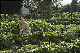 Backyard Products Monroe Mi A Michigan Teen Farms Her Backyard The New York Times