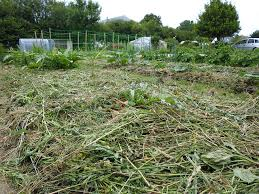 the oft forgotten art of growing mulch the permaculture research