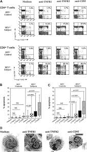 prevost floor plans increased sensitivity of t lymphocytes to tumor necrosis factor