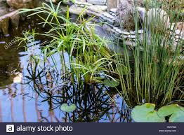 Decorative Pond Small Decorative Pond With A Beautiful Stone Wall And Growing