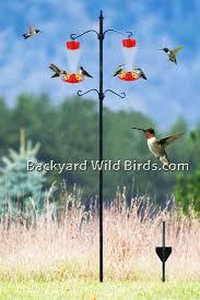 Backyard Wild Birds Http Www Backyardwildbirds Com Assets Images Store Hummingbird