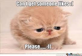 Sad Kitty Meme - sad kitty by kevin gallego 165 meme center