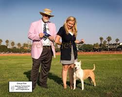 l american pitbull terrier a p b t dogbreedz photo keywords group first