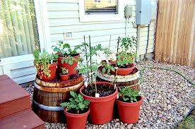 Container Gardening Ideas Agriculture Page 5 Container Gardening