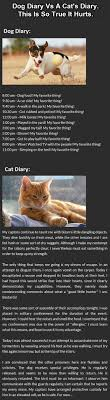Awesome Quotes About Cats Being - awesome picture 81 collection funny cats picture 300 pics for