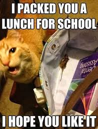 Stupid Cat Meme - 40 pics of funny animal attacks that are guaranteed to make you