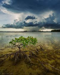 search storms florida landscape photography by paul marcellini