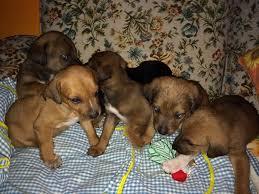 cani in cerca di casa polla sa cuccioli di in cerca di una casa ecco l appello