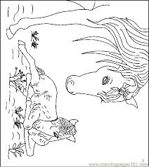 mammals coloring pages 22 best horses images on pinterest coloring books horse