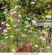english country garden stock images royalty free images u0026 vectors