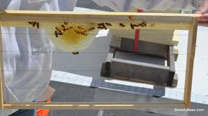 foundationless frames are working willow hive check 4 26 12