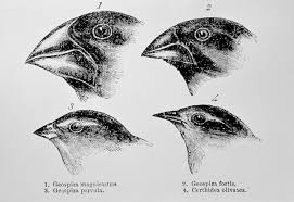 charles darwin u0027s finches and the theory of evolution