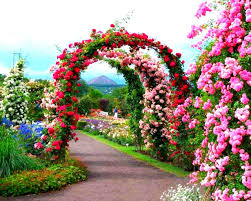Rose Garden Layout by 15 Beautiful Gardens For You Millionplaces4you Vibrant Garden