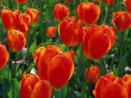 flower delivery cincinnati about florist cincinnati oh florist