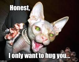 Cat Hug Meme - image tagged in psycho cat hug me let me love you imgflip