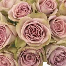 Lavender Roses Lavender Novelty Rose