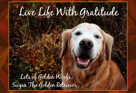 thanksgiving pet photos gratefulness to your dog u0027s golden woofs