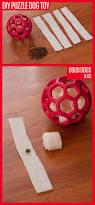 best 25 dog enrichment ideas on pinterest diy enrichment toys