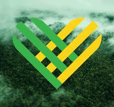 greenpeace brasil greenpeace brasil