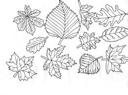 printable 50 leaf coloring pages 651 fall leaf coloring pages