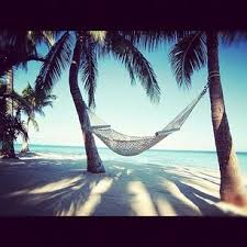 115 best beach palm trees u0026 hammocks images on pinterest places