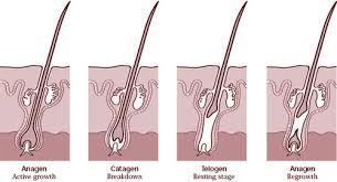 natural hair growth stimulants hair growth shoo