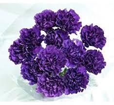 purple carnations 140 fresh cut moonshade purple carnations advance