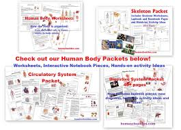 human body systems u2014 worksheets homeschool den